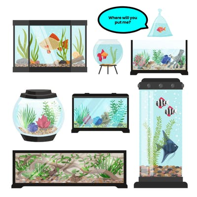How to pick a home (tank) for your fish?