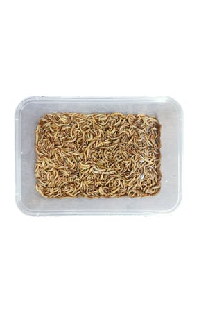 Mealworms (tub)