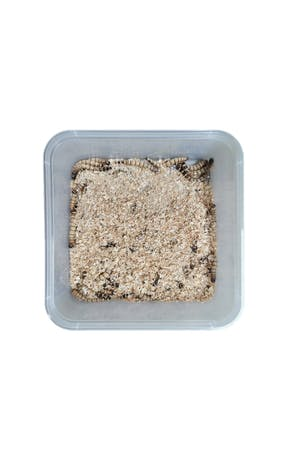 Superworms (tub)