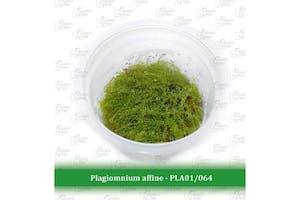 Aquatic Farmer Plagiomnium Affine