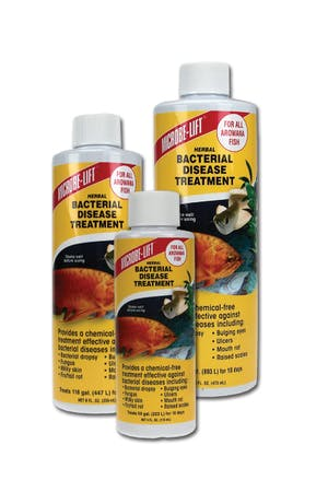 MICROBE-LIFT Herbal Bacterial Disease Treatment Arowana