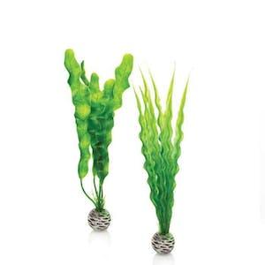 biOrb Easy Plant Set M Green