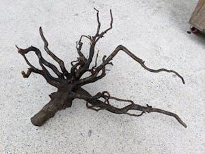 ANS Kusri Driftwood XL (4) 65-75cm (Random Pick)