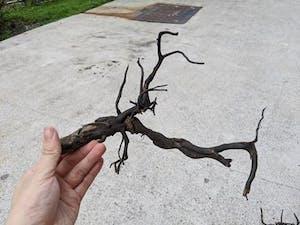ANS Kusri Driftwood M (2) 30-40cm (Random Pick)