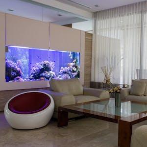 Reef Systems - Consult, Design & Build Aquariums