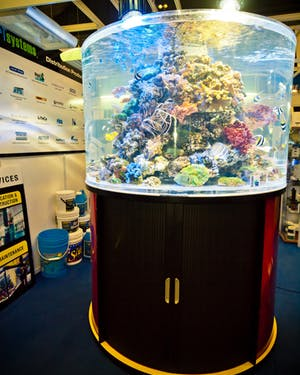 Reef Systems - Acrylic or Glass Tanks Manufacturing