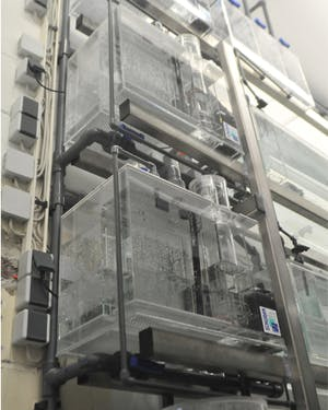 Reef Systems - Building of Life Support System