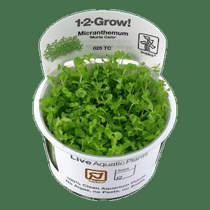 TROPICA Micranthemum Monte Carlo 1-2-GROW