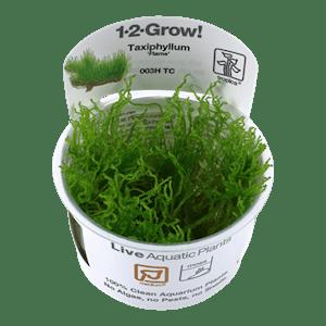 TROPICA Taxiphyllum Flame 1-2-GROW