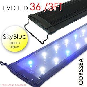 ODYSSEA EVO Led 36 72W Skyblue (10000K+blue)