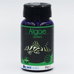 NT LABS Pro-f Algae Wafers 40g