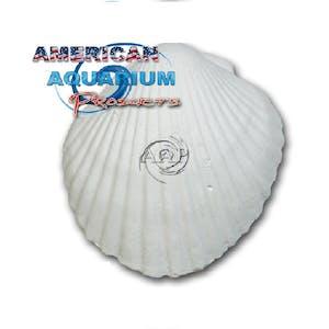 American Aquarium Products (AAP) Wonder Shell (Super Size)