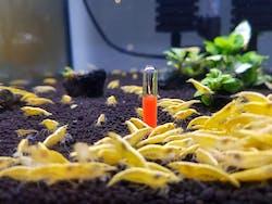 Rise of the fallen (Shrimp tank ornament)