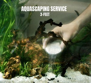 FishyHub Aquascaping Service for 3 feet tanks