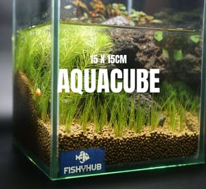 Aquacube Set