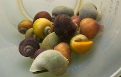 Color Snail