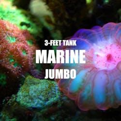 Adventure Pack - Marine 3-Feet Set