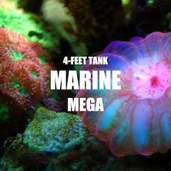 Adventure Pack - Marine 4-Feet Set