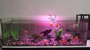 ANS Glass Edge Fish Tank 90x30x30