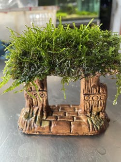 Weeping Moss (Pagoda designed)