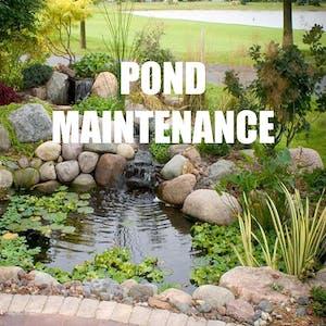 Pond Maintenance Service