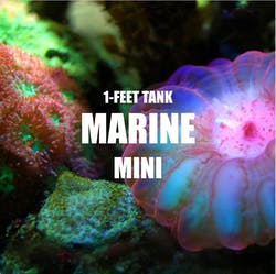 Adventure Pack - Marine 1-Feet Set