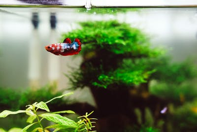 Why Fish Make Better Pets Than Dogs
