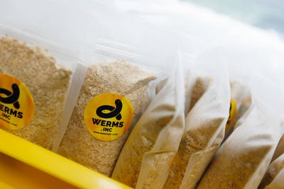 A Wriggly Proposition: Interview with Werms.Inc Technopreneur, Aaron